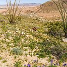Bloomin' Badlands by Mike Herdering