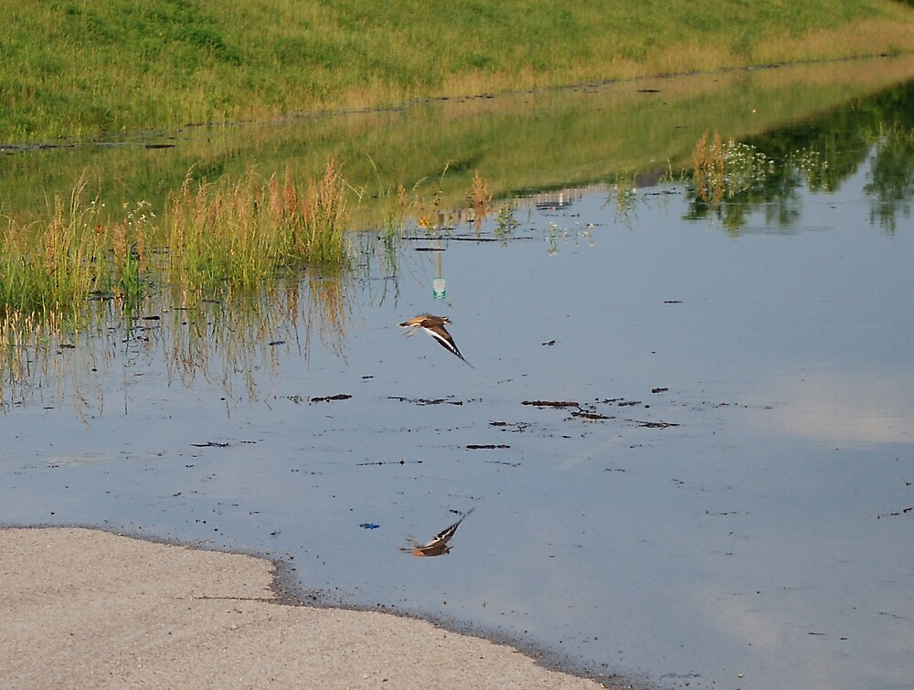 Flood bird by Jim Caldwell