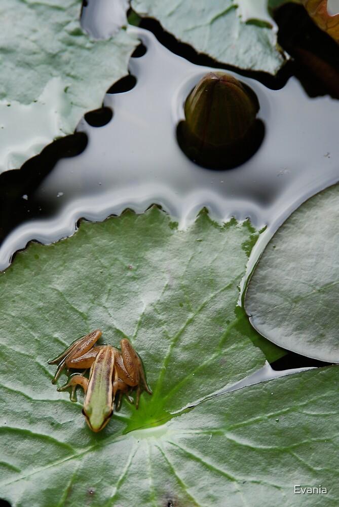 Pond Life by Evania