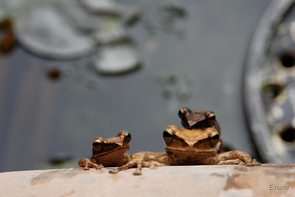 A Frogs Life by Evania