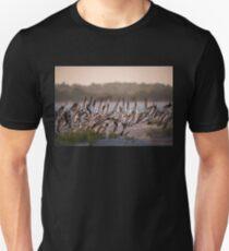 Black Skimmers Nesting T-Shirt