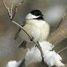 Winter Chikadee by whisperjo