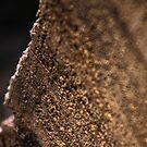 Log Detail by Pandamatastic