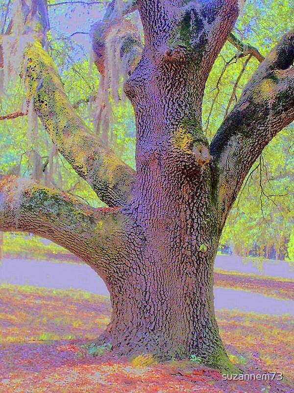 Old Oak by suzannem73