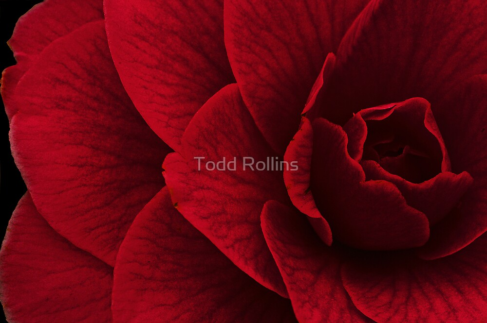 My Obsession. by Todd Rollins