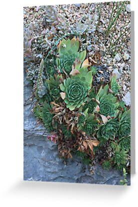 Succulent  by PaigeAvocado