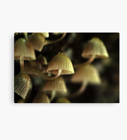 in the dark Canvas Print