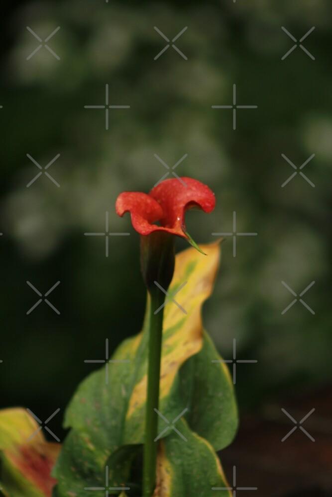 Single Red Flower by EcstasyPanda