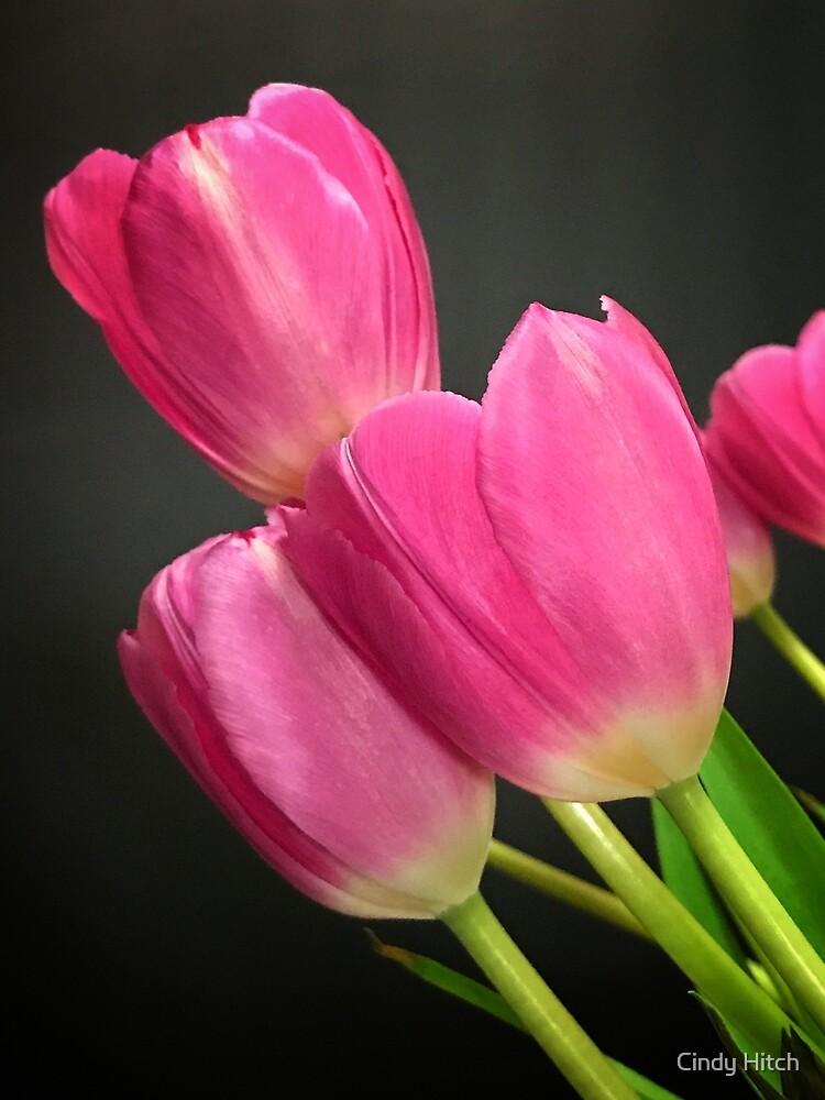 Tulip Trio by Cindy Hitch
