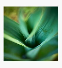 Leek Photographic Print