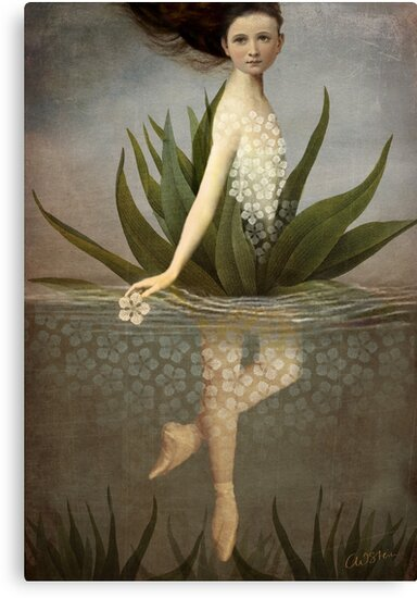 Waterlily by Catrin Welz-Stein