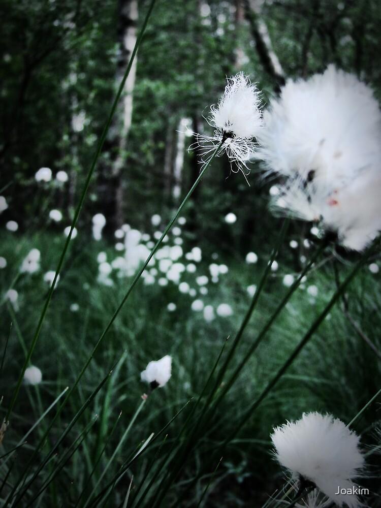 Puffy by Joakim