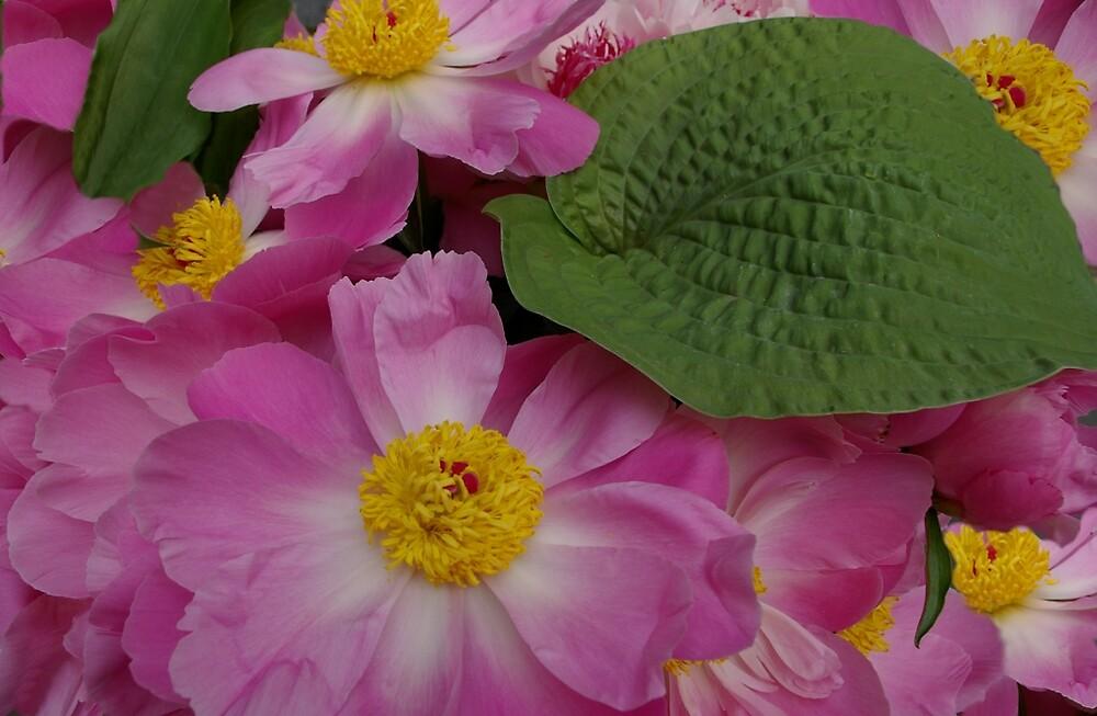 A Jumble of Pink Peonies by Tom  Reynen