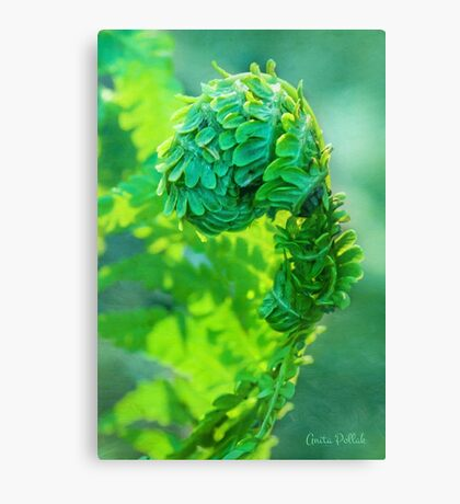 I Am Fern Man! Canvas Print