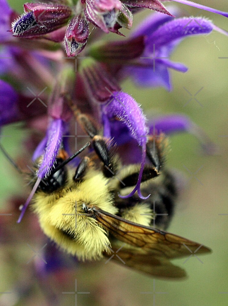 Upside Down Bee by mikrin