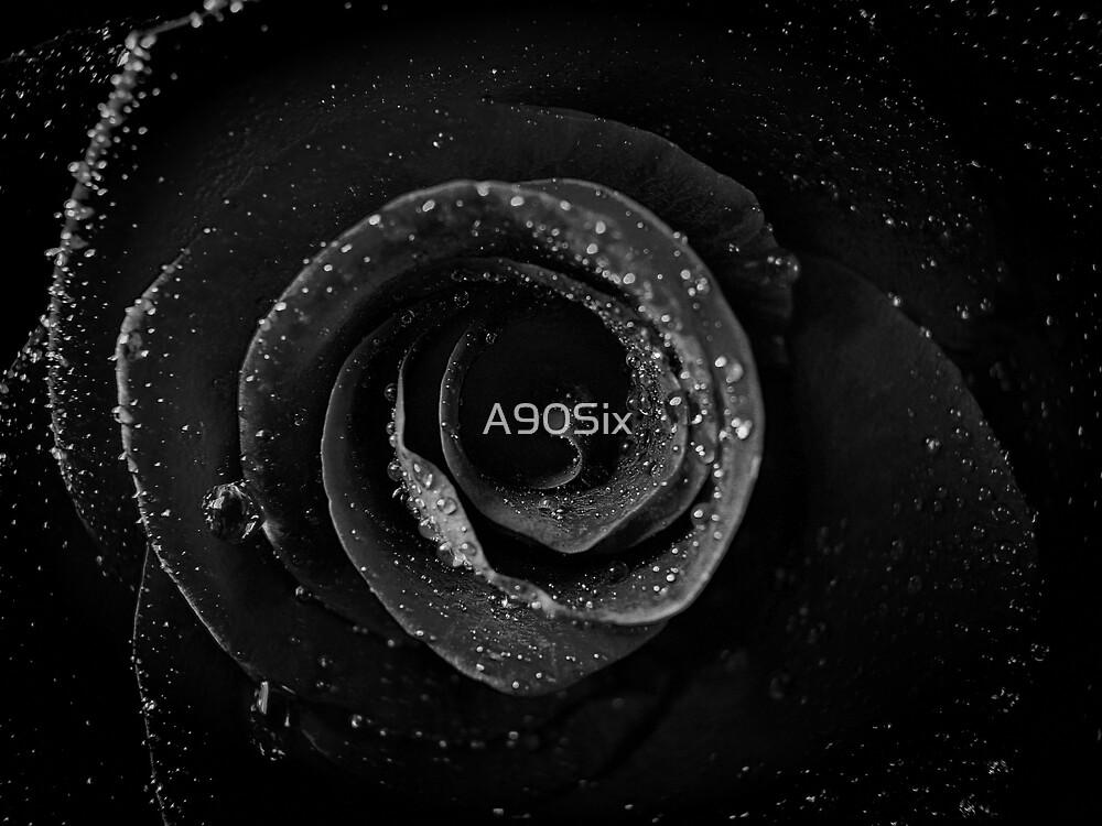 Night Sky Rose by A90Six