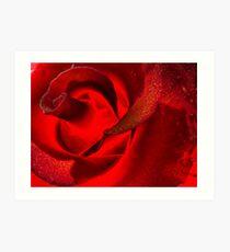 Rose Glows Art Print