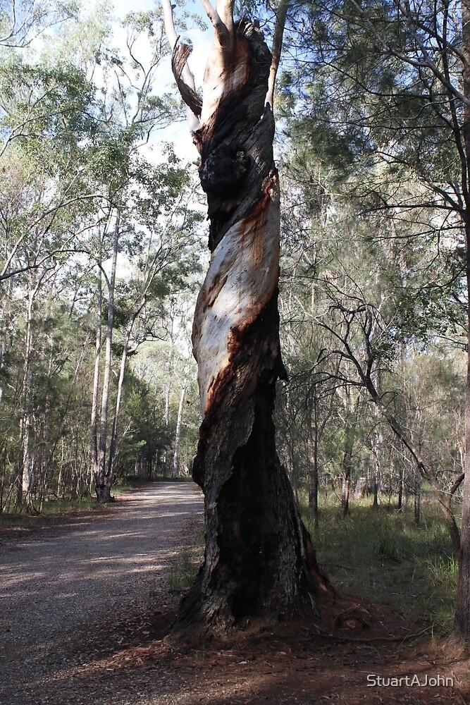 The Spiral Tree - Karawatha by StuartAJohn