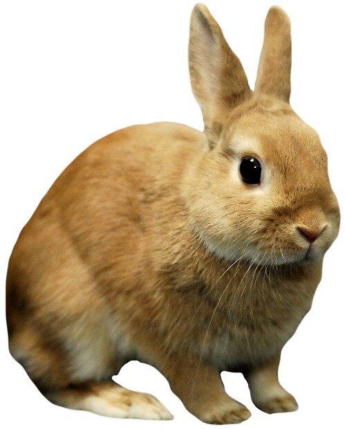 For rabbit lovers by AlternateOption