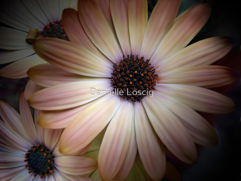 Painted Daisies by Danielle Loscig
