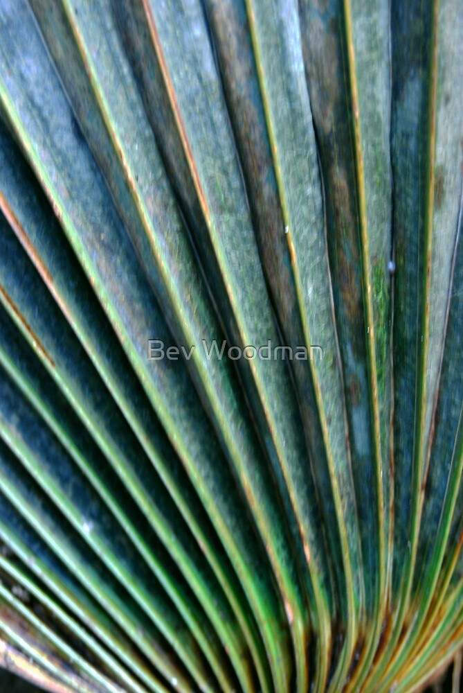 Corrugations by Bev Woodman