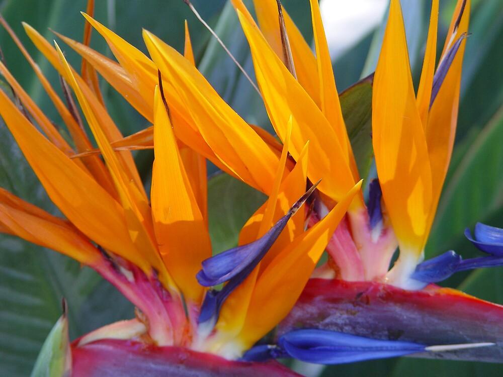 Flower in Okinawa by traveler25