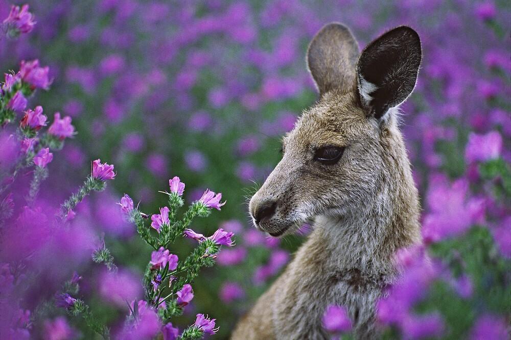 Roo in flowers. by DaveBassett