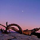 Ansel's Jeffrey Pine w. a Rising Moon  by Nancy Richard