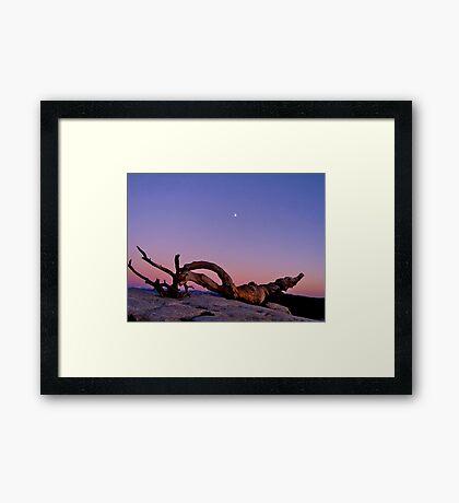Ansel's Jeffrey Pine w. a Rising Moon  Framed Print