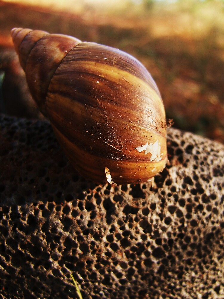 Snail and lava rock by Diana Forgione