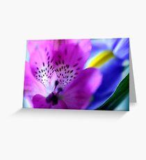 alstromeria & iris Greeting Card