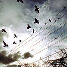 Richmond birds by UniSoul