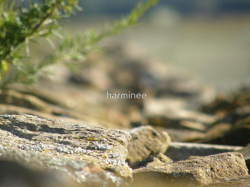 Stone Wall by harminee