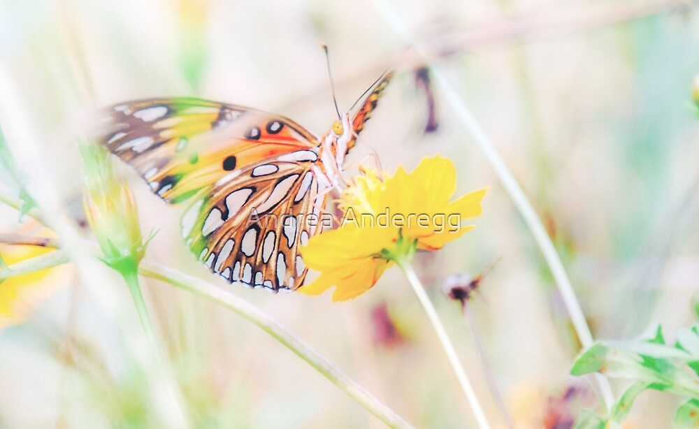 Ethereal Butterfly by andreaanderegg