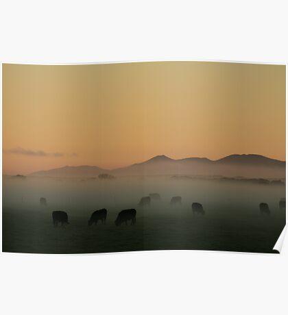 Sunrise near Stanley in far nor west Tasmania , Australia Poster