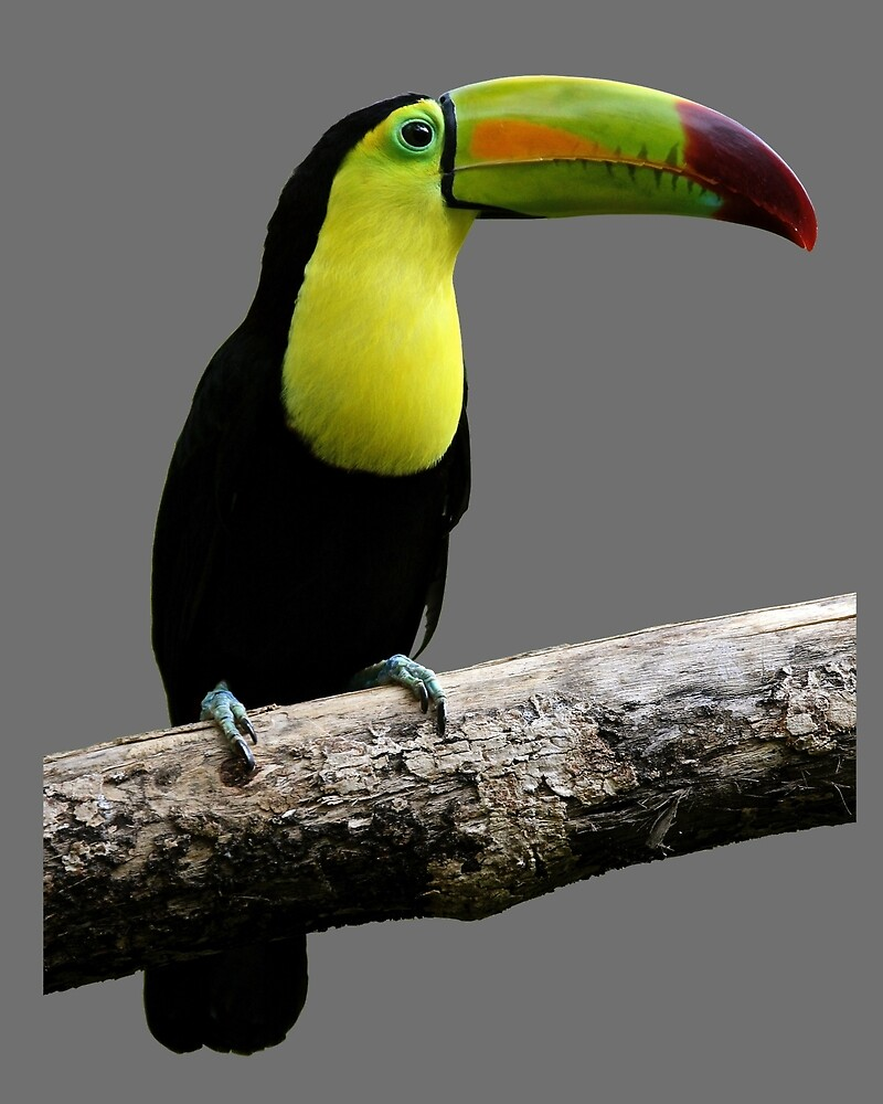 TOUCAN by BackInTime