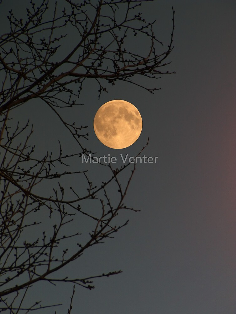 Twilight Moon by Martie Venter