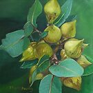 Eucalyptus Mallee by Thanh Duong