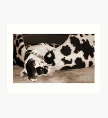 Great Dane Puppy Sleeping Art Print