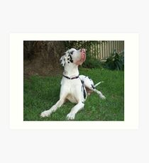 Great Dane Puppy Chilling Art Print