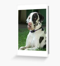 Great Dane Puppy Greeting Card
