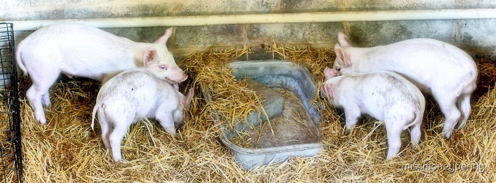 Pink piglets by missmoneypenny