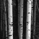 Monochrome Wilderness Wonders by Bo Insogna