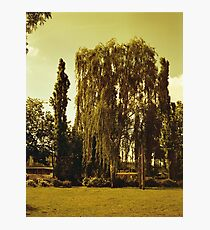 Tree in a park Photographic Print