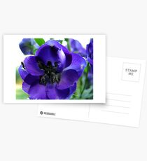 Tall And Purple Delphinium Postcards