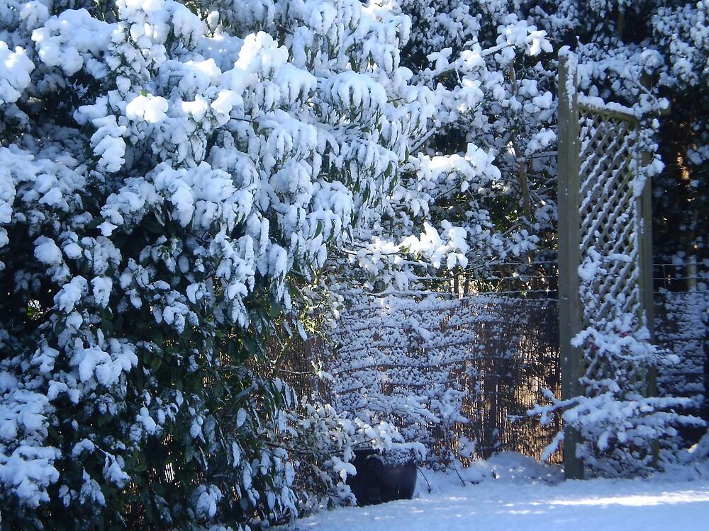 A Snowy Corner  by oscars