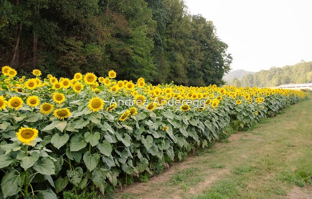 Sunflowers 6 by andreaanderegg