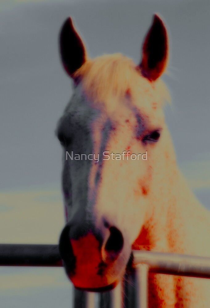 Quater Horse Gelding by Nancy Stafford