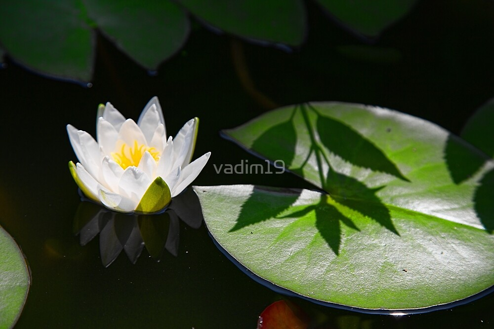 China. Xian. Grand Mosque. Water Lily. by vadim19