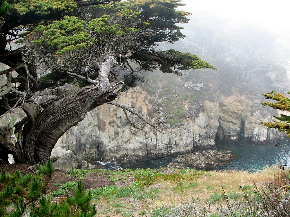 Point Lobos by Rugirl